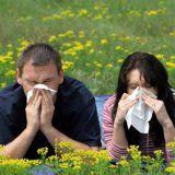 Алергія в організмі здорової людини