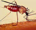 Хвороба малярія лікування наслідки