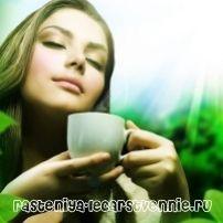Чай: корисні властивості та протипоказання