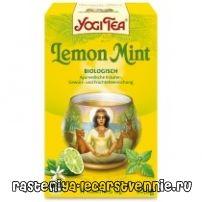 Чай з м'ятою: користь і шкода, рецепт, корисні властивості