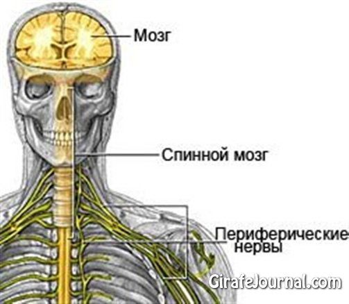 Чим лікувати нервову систему?