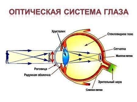 Що таке зоровий аналізатор: будова і функції
