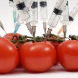 Генномодифіковані продукти в раціоні людини