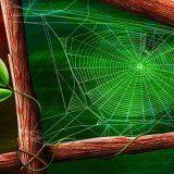 Використання павутини в медичних цілях