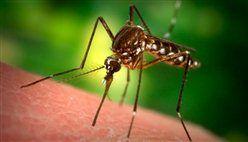 Як позбутися від укусів комарів в домашніх умовах