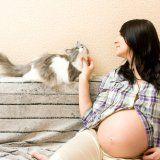 Як кішки можуть вплинути на вагітність