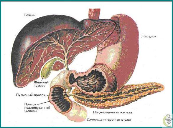 Як лікувати хронічний панкреатит і чим він викликаний