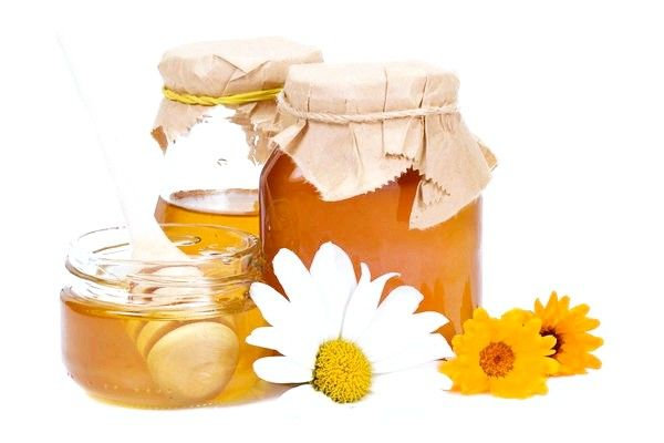 Кіпрейний мед: корисні властивості та протипоказання
