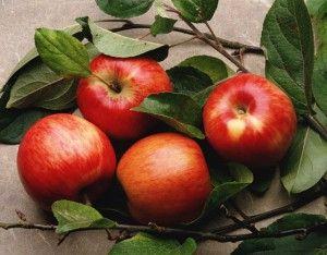 Кому шкідливі яблука