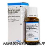 Лімфоміозот - інструкція, відгуки, застосування, аналоги, як приймати, склад