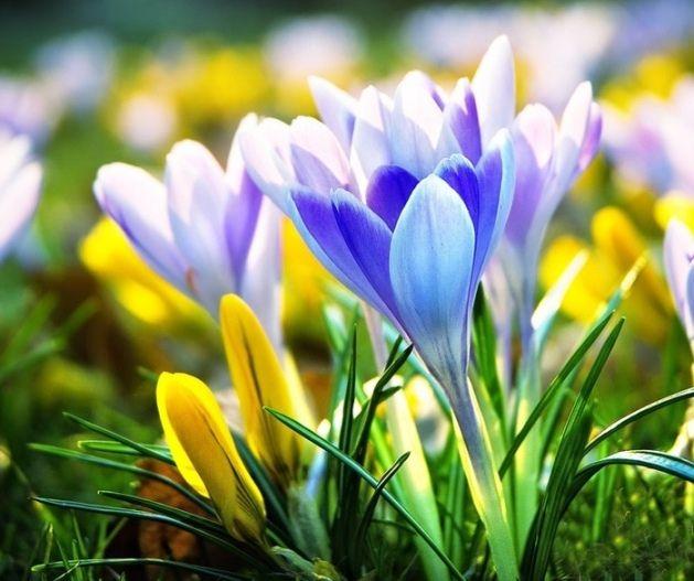Мужчины для женщин: самые искренние пожелания на 8 марта