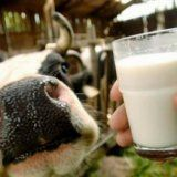 Корисні якості молока для організму