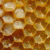 Застосування маточного молочка бджіл