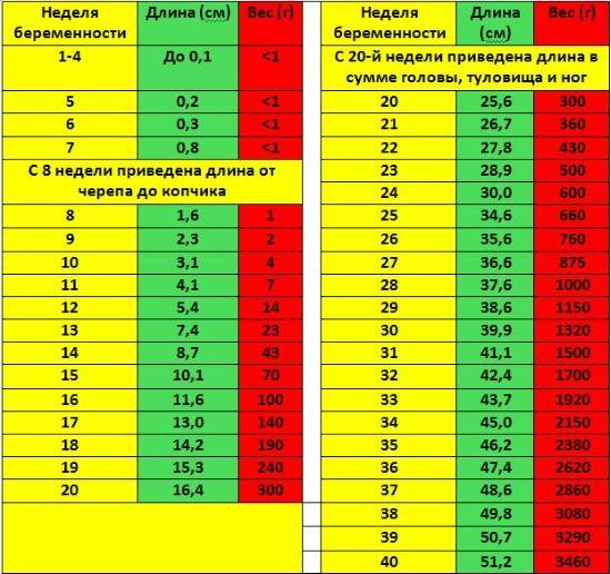Размер эмбриона по неделям: таблицы