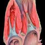 Ризики пов'язані з аневризмою серця