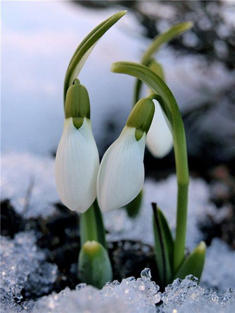 Весна - время перемен