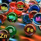 Вітаміни та мінеральні речовини для організму