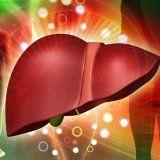 Відновлення печінки народними засобами